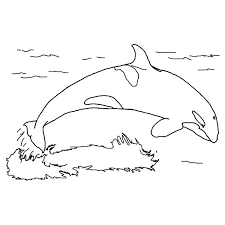 coloring page killer whale orca whale coloring pages printable get coloring pages