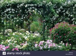 mannington hall rose garden trellis stock photo royalty free