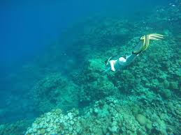 Iowa snorkeling images Devil 39 s grotto grand cayman cayman islands top tips before you jpg