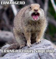 Ermahgerd Animal Memes - 43 best ermahgerd animals images on pinterest funny animals funny