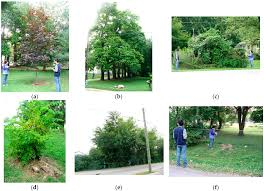 remote sensing free full text estimating tree frontal area in
