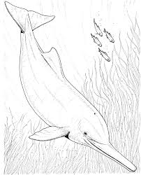 river dolphin coloring page sketch coloring page