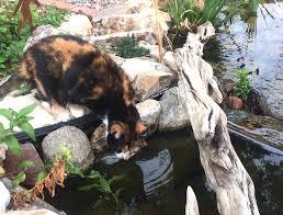 Is A Backyard Pond An Ecosystem The Pond Gnome Phoenix Pond Blog