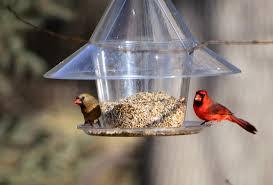 bird feeding taking wing by the million in minnesota startribune com
