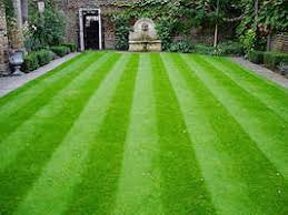 lawn and greens grass seed 10kg