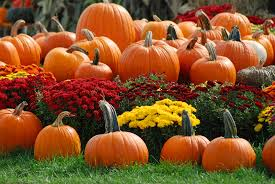 autumn halloween background fall pumpkin wallpaper and screensavers wallpapersafari
