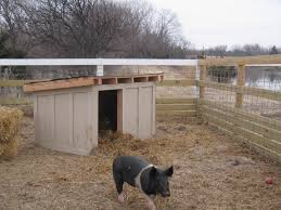 image result for pig pens and shelters hobby farm pinterest