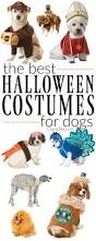 spirit halloween tempe 1574 best doggie halloween costumes images on pinterest