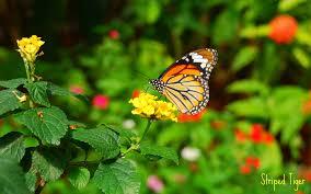 butterfly on flower wallpaper 6992368