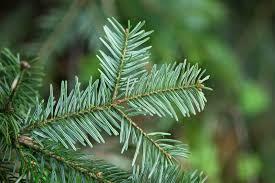 the u0027scope o christmas tree it u0027s not easy being green