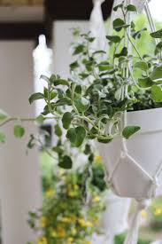 hanging planters are easy to make u2013 a beautiful mess
