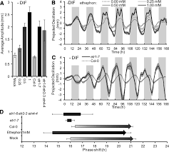 antiphase light and temperature cycles affect phytochrome b