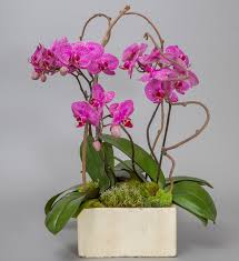 orchid arrangements orchid arrangements