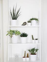 houseplants to fill your home with kate la vie cool house plants