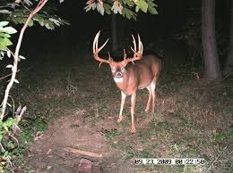 20 monster bucks glorious racks caught trail cam