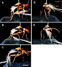 the biomimicry manual check out the clever bombardier beetle the