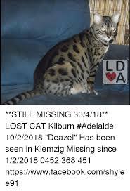 Lost Cat Meme - still missing 30418 lost cat kilburn adelaide 1022018 deazel has