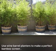 Large Tree Planters by Wine Barrel Planters Are Heavy And Strong So Large Bamboo Will Not