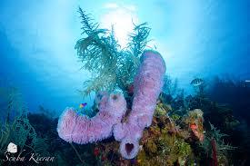 marine life u2013 west bay divers