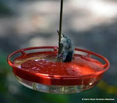 using georgia native plants hummingbird favorites in my garden southern meadows more than a hummingbird feeder