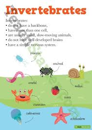 best 25 vertebrates and invertebrates ideas on pinterest