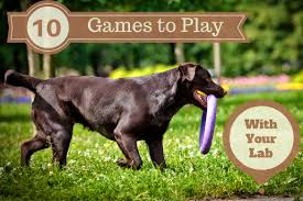 unleashing energy 10 great games to play with your lab