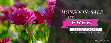 buy live plants u0026 seeds online in india indoor plants outdoor