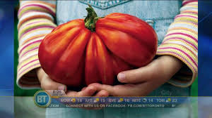 Frankie Flowers - flowers all about tomatoes