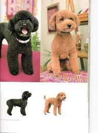 haircutsfordogs poodlemix 42 best japanese dog grooming ideas for snoop images on pinterest