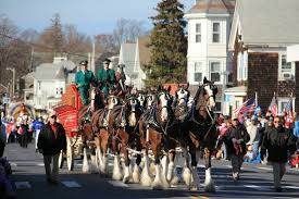 the clydesdales at america s hometown thanksgiving parade plymouth ma