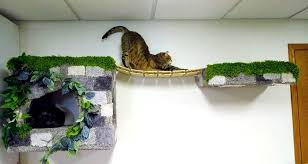 twisted tree pet furniture home