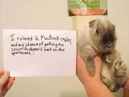 Dog Shaming Meme - first there was dog shaming then cat shaming now bunny shaming