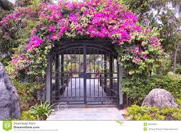 garden gate flowers garden stock photo image of plant flower gate scenic 39823992