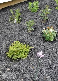 create a low maintenance flower bed our front yard progress