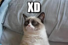 Xd Meme - xd grumpy cat bed meme on memegen