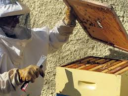 urban beekeeping is a possibility in danbury newstimes