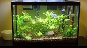 Home Aquarium Cuisine Small Home Aquarium Design U2013 See Here Styfisher Best Home