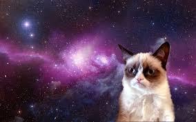 Grumpy Cat Photo 1 Best - grumpy cat jokes 1 youtube