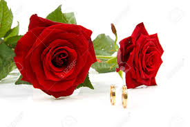 red rose rings images Two red roses and wedding rings over white background stock photo jpg