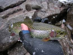 a green winter utah winter fly fishing fishwest