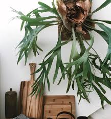 biggest house plants go green unique indoor plants for your home propertyroom360