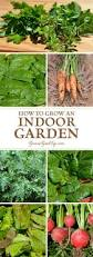 How To Grow Vegetables by How To Grow An Indoor Garden Compact Plants And Spaces