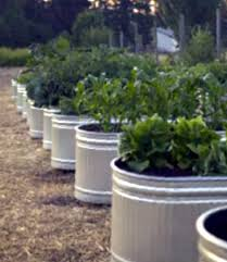 inside urban green galvanized troughs converted to sub irrigation