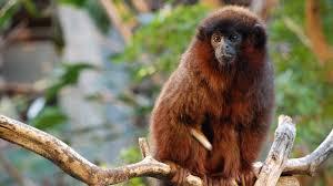 rainforest life zoological society of london zsl