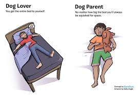 Dog Lover Meme - 7 differences between dog lovers and dog parents bored panda