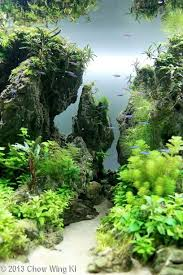 Aquarium Aquascapes Best 25 Aquascaping Ideas On Pinterest Aquarium Aquarium Ideas