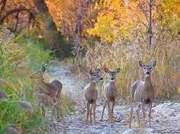 2017 michigan fall foliage tours upper peninsula parks