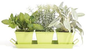 Window Sill Herb Garden Designs Spectacular Design Windowsill Herb Garden Kit Indoor