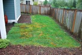 Inexpensive Backyard Landscaping Ideas Front Garden Ideas On A Budget Garden Ideas Uk Cadagucom With