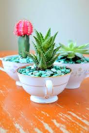 Succulent Planters For Sale by Teacup Succulent Planters